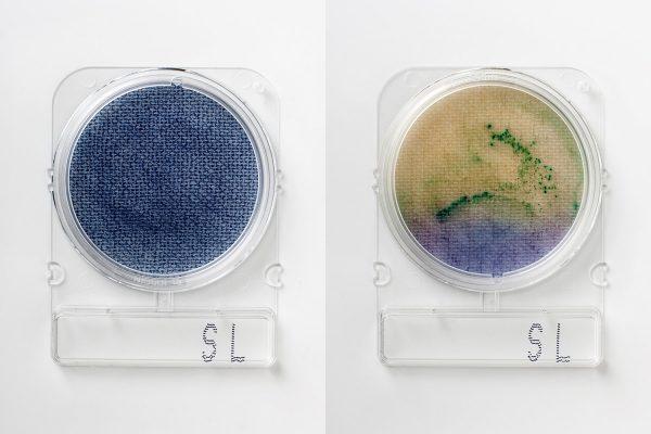 Compact Dry SL: Recuento Salmonella x 4 placas R-Biopharm