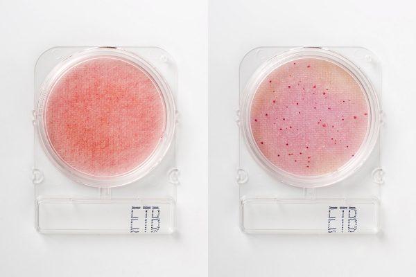 Compact Dry ETB: Recuento Enterobacterias x 4 placas R-Biopharm