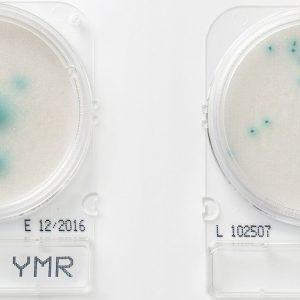 Compact Dry YMR: Hongos y levaduras Rapid 100 uds R-Biopharm